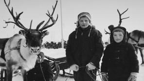 Reindeer in my Saami Heart